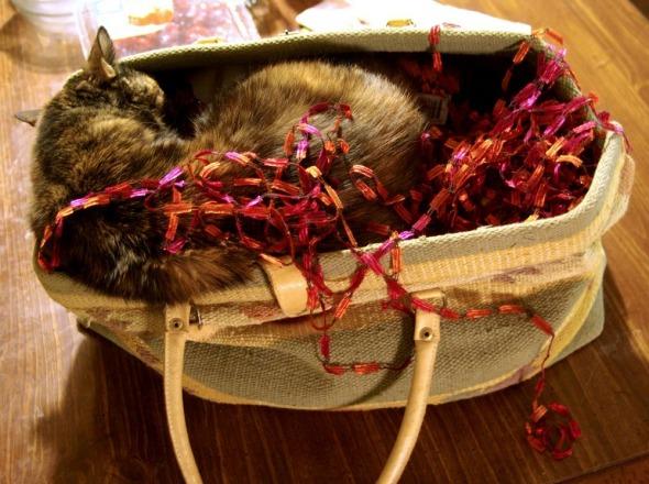 tortoiseshell cat in bag