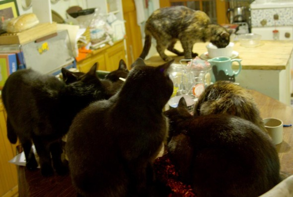 seven cats in the kitchen
