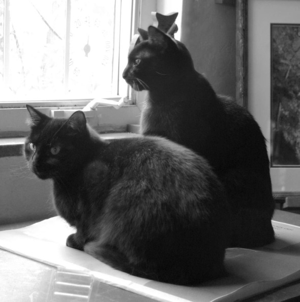 two black cats looking out a window