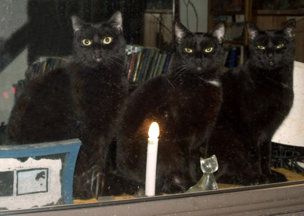 three black cats at the window