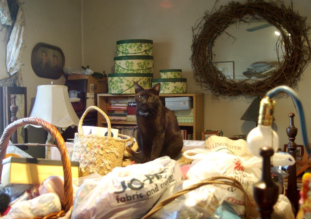 black cat in piles of yarn