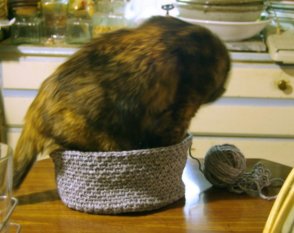 tortoiseshell cat tries to fit into crocheted hat