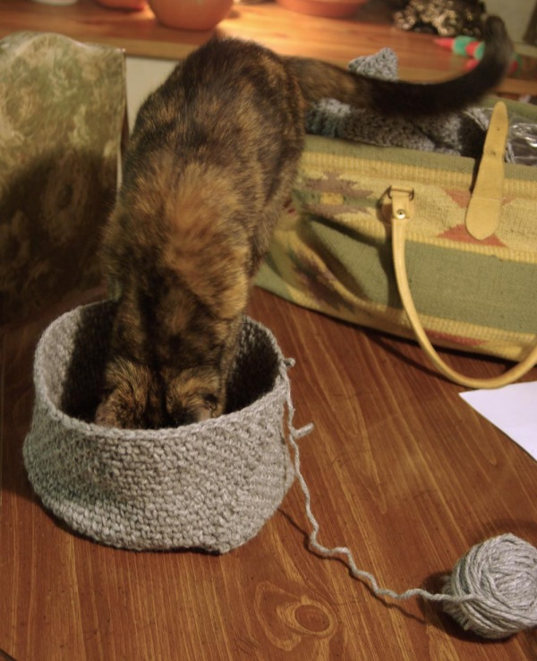 tortoiseshell cats test crocheted hat