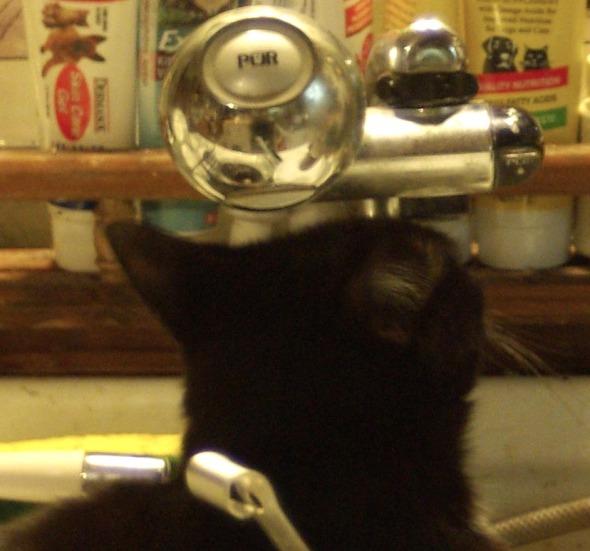 black cat looking at faucet