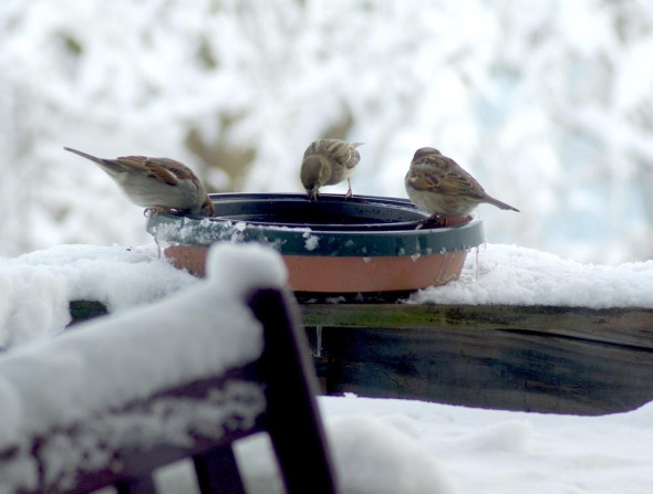 birds at birdbath with snow