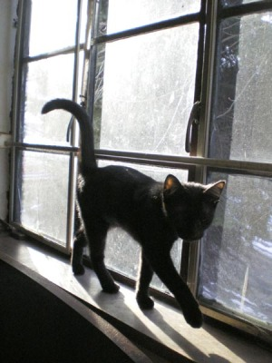 black cat on windowsill