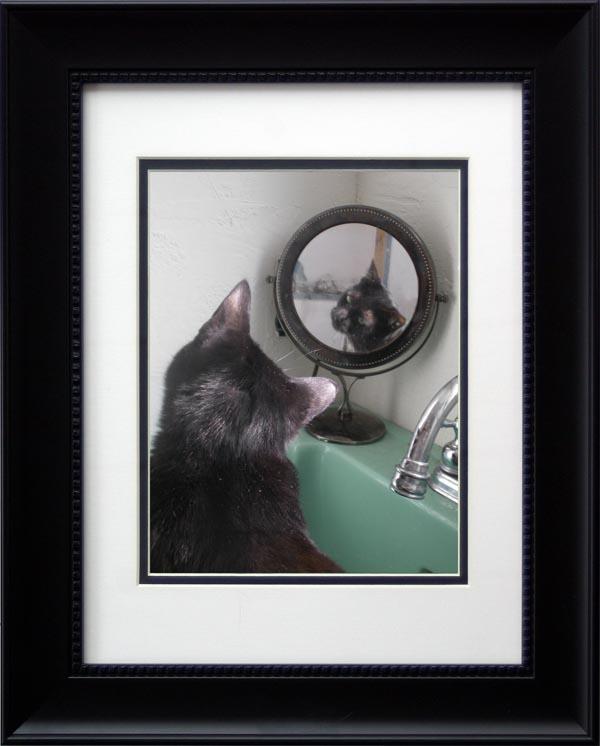 photo of cat looking in mirror