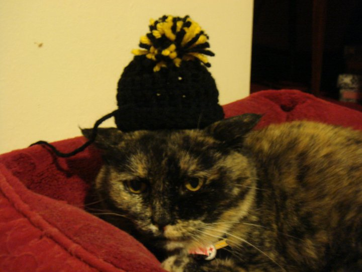 steeler the tortie cat