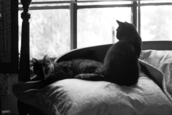 two cats on a pillow