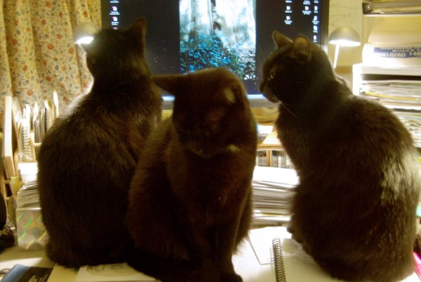 three cats on desk