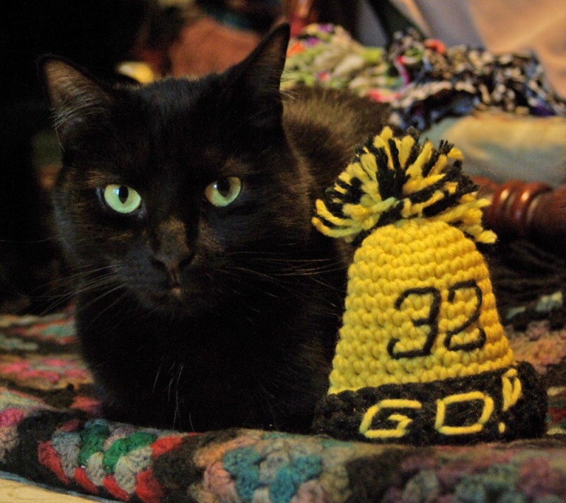 black cat with steelers hat