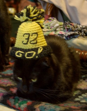 black cat wearing steelers hat