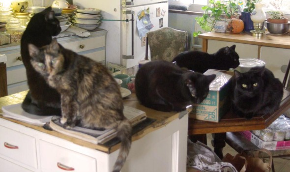 five cats in the kitchen