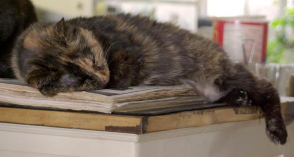 tortie cat sleeping on cookbook
