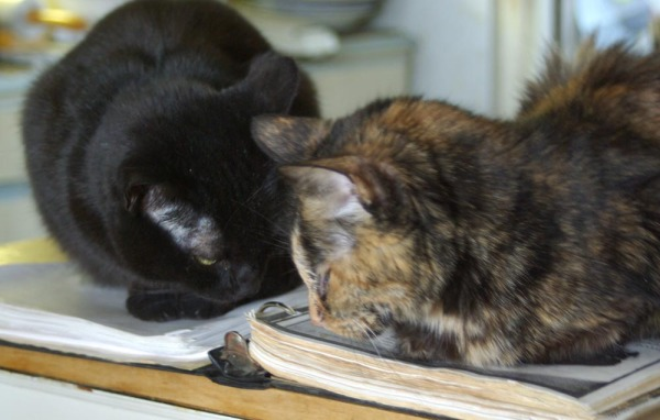 photo of black cat and tortie cat
