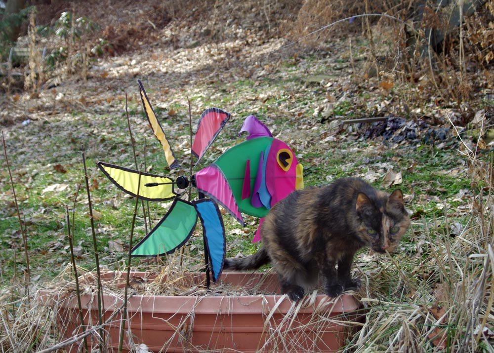 tortoiseshell cat with weatherfish