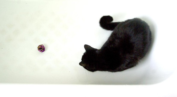 cat with toy in bathtub