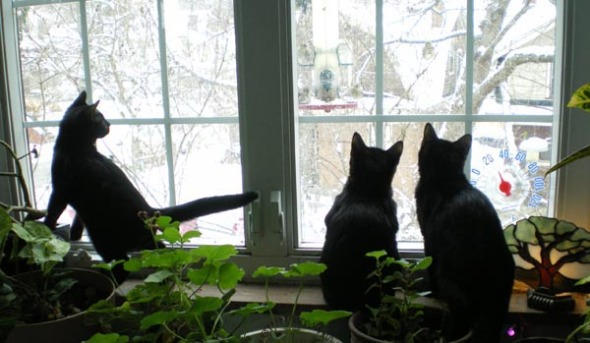 birdwatching cats