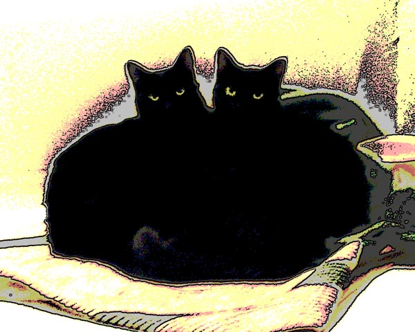 illustration of two black cats curled together