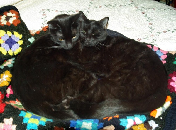 heart-shaped black cats
