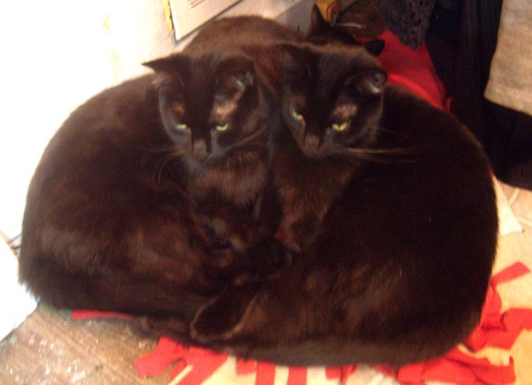 two heart-shaped black cats