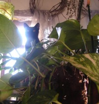 black cat in plants