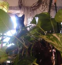 black cat in plants