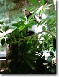 namir in plant