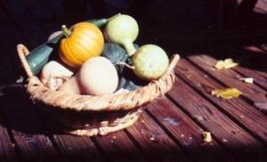 basket of squashes