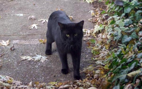 black cat on sidewalk