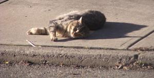 tabby cat on sidewalk