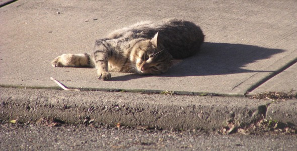 tabby cat on sidewalk