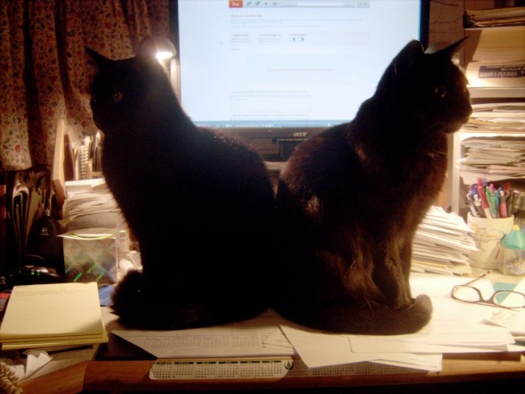 two black cats in front of computer