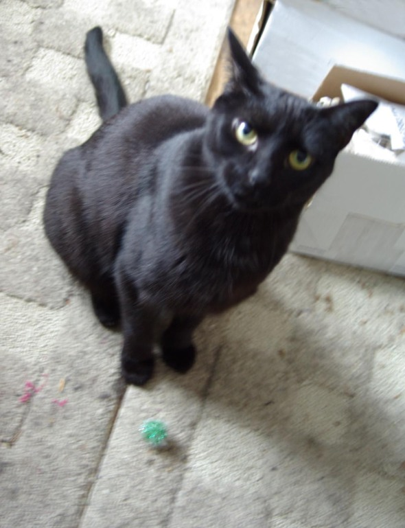 black cat with green sparkle ball