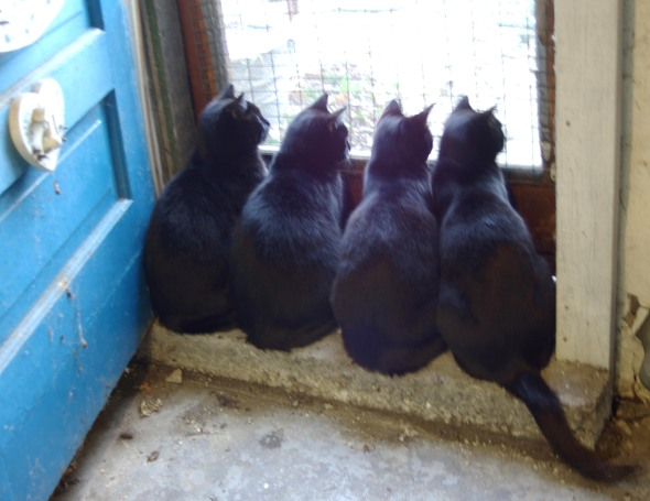 four black cats at basement door