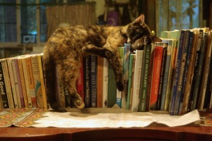tortoiseshell cat sleeping on books