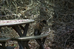 cat looking into wooded area
