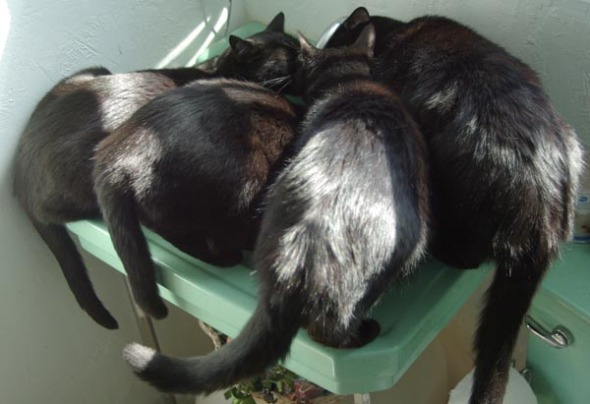 four black cats drinking from faucet