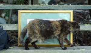 tortie cat in front of painting