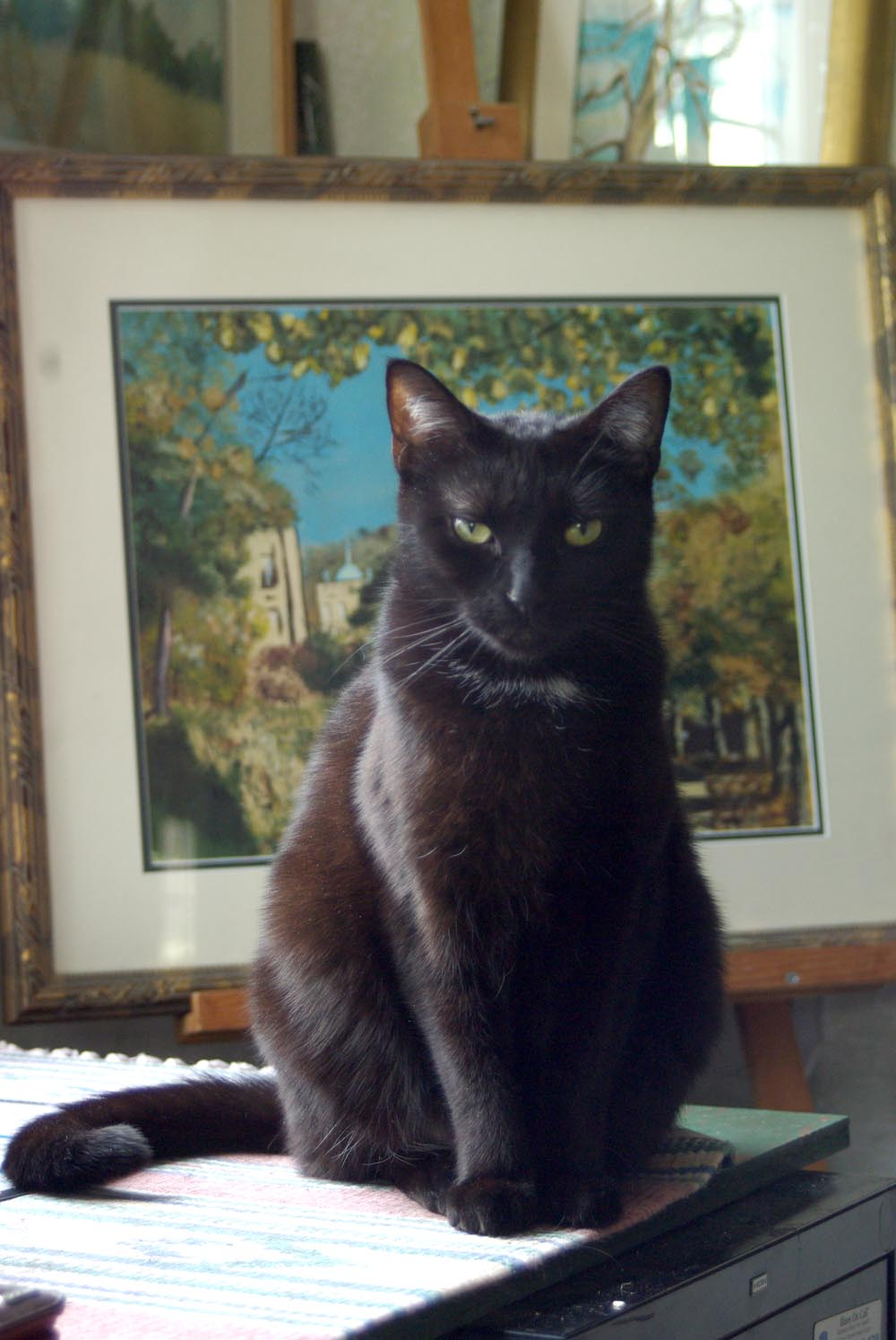 black cat in front of painting