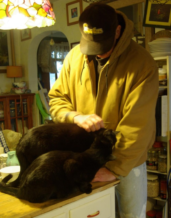 three black cats with one person