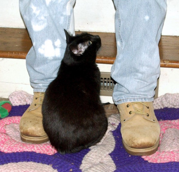 person's feet with black cat