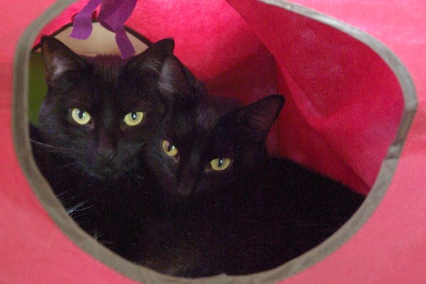 two black cats in red cat cube