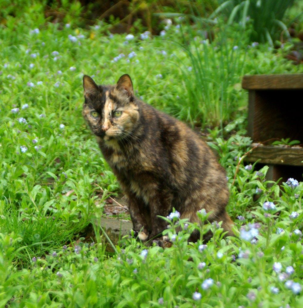 tortie cat in greens
