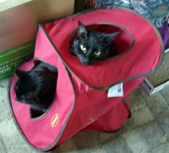 two black cats in a cube