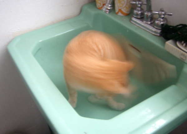 blurry orange kitten in sink