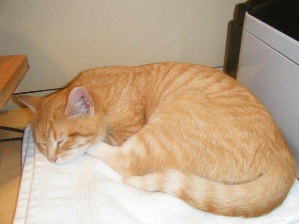 orange cat sleeping on desk