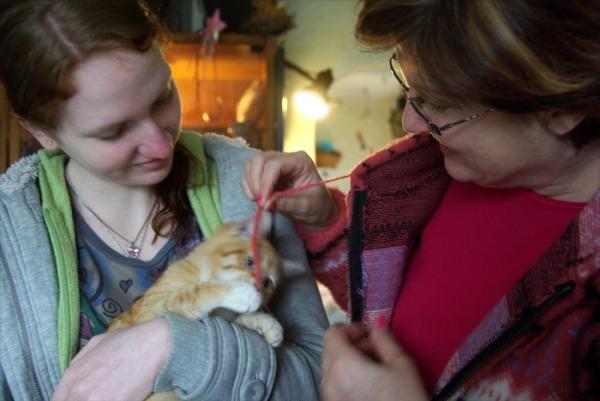 Orange kitten with new family