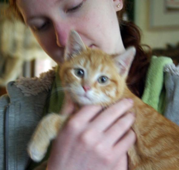 orange kitten with teenage girl