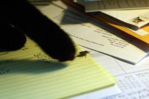 black cat paw and stinkbug